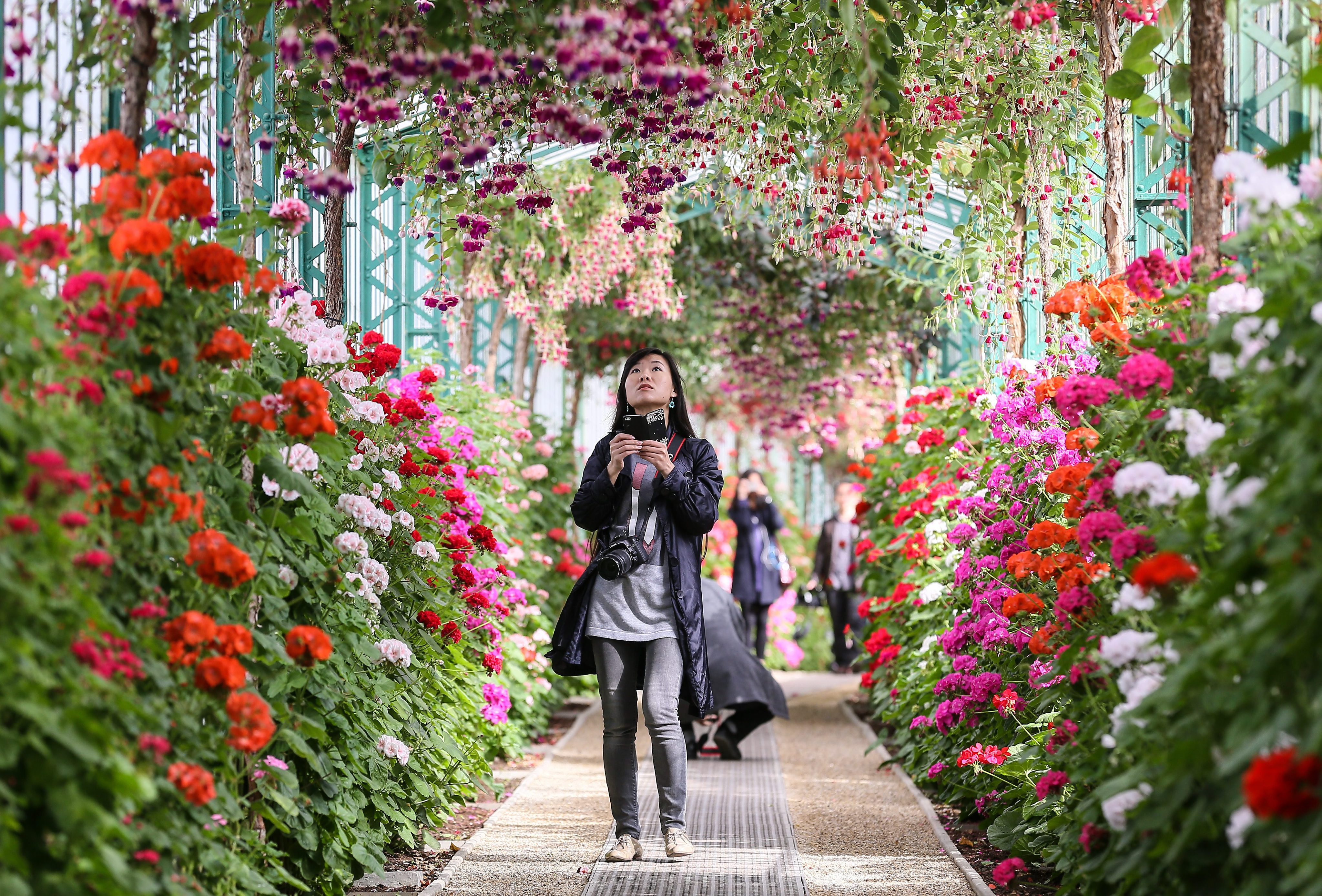 Royal Greenhouses open to public in Brussels