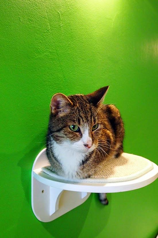 cat-cafe-brussels