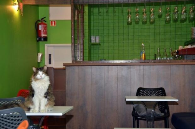 le-chat-touille-5