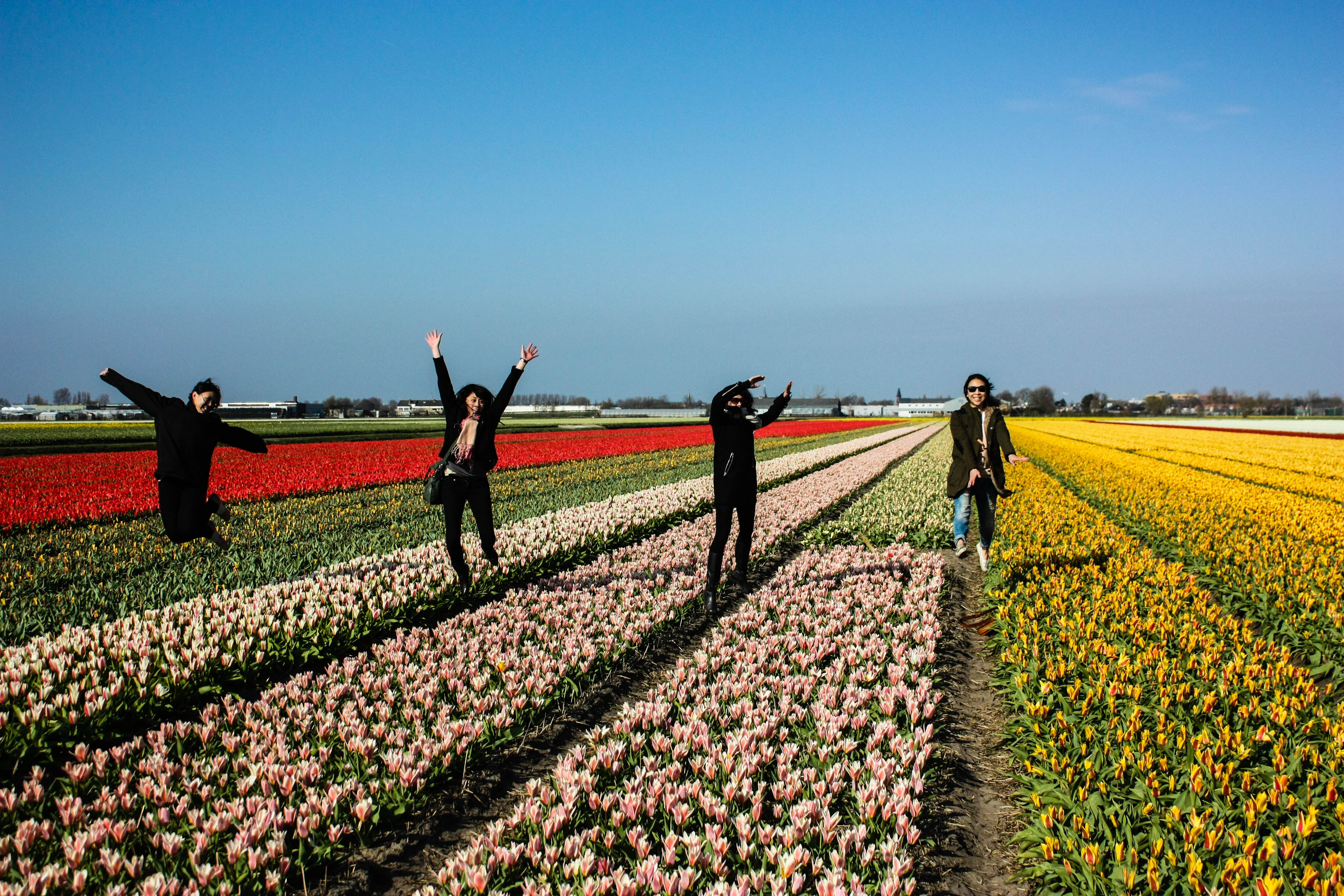 keukenhof-tulip-fields-Amsterdam