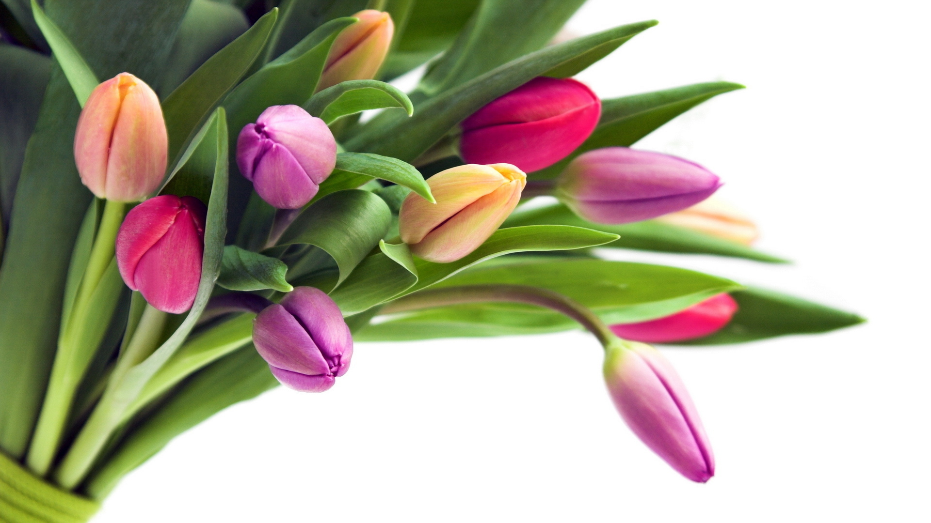 Holidays___International_Womens_Day_Tulips_on_a_white_background_as_a_gift_on_March_8_057119_