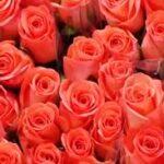 Крупнейший рынок цветов готовится ко Дню Валентина