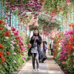 Королевские оранжереи Брюсселя откроют для публики