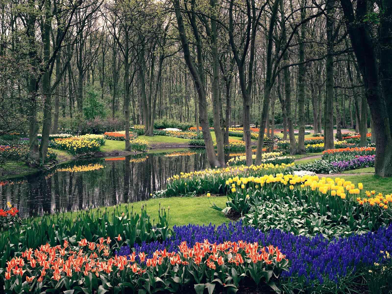 Park-Keukenhof-near-Amsterdam_1