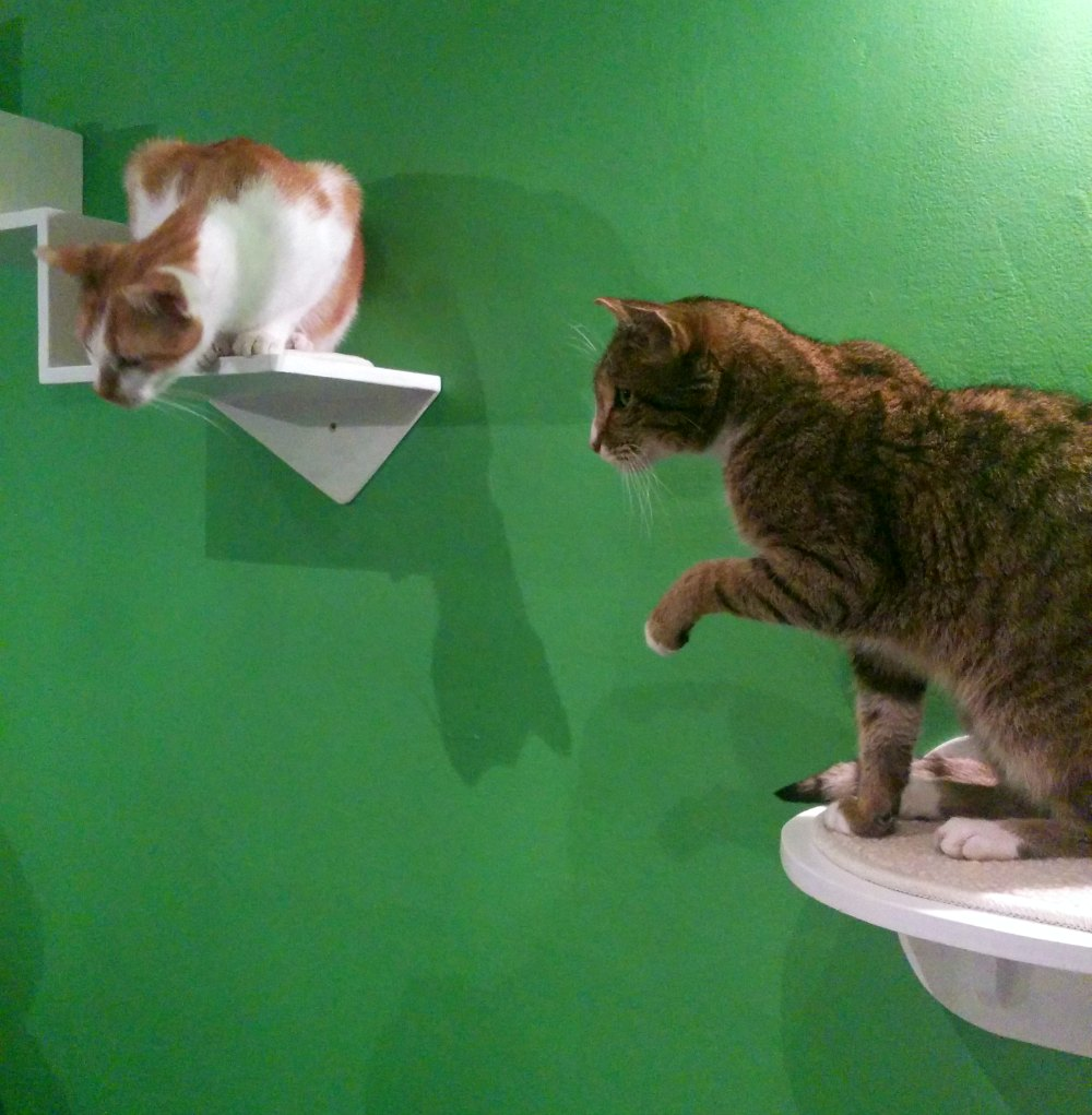 Cats-are-Coming-Le-Chat-Touille