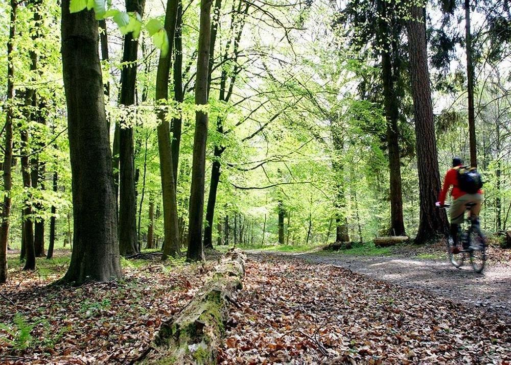 Forest-Brussels